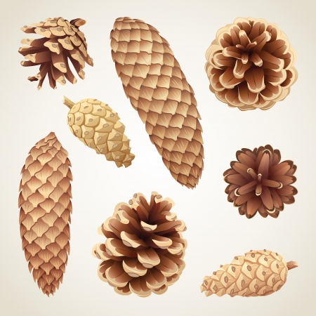 Collection of pinecones and fir cones, eps8 vector illustration Vettoriali
