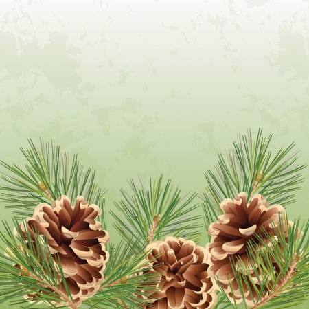 pine cone: Christmas and New Year greeting card or background