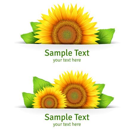 semillas de girasol: Bandera, de fondo floral o tarjeta de plantilla con girasoles