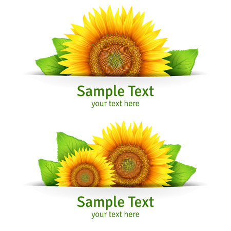 bees: Banner, floral background or template card with sunflowers Illustration