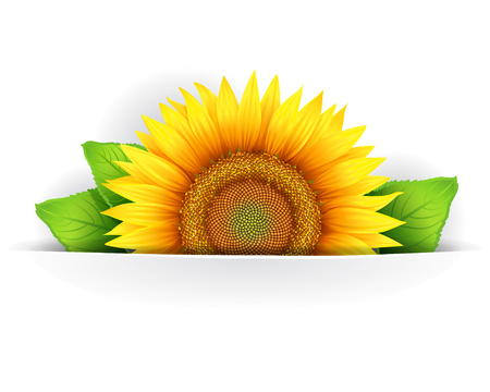 pollinate: Banner, floral background or template card with sunflowers Illustration