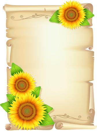 Alte Schriftrolle mit gelben Sonnenblumen Blumen Sonnenblume mit Blättern Standard-Bild - 25993485