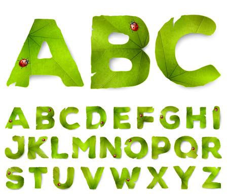 Vector letters van het alfabet gemaakt van groene bladeren, geïsoleerd op wit
