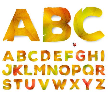 alfabeto con animales: Letras del alfabeto vector hechas de hojas de otoño, aislados en blanco Vectores