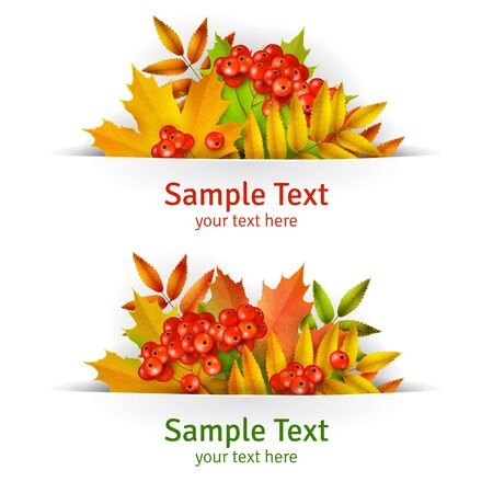 mountain ash: Banner, Autumn background or template card with yellow maple leaves and mountain ash berries, vector background