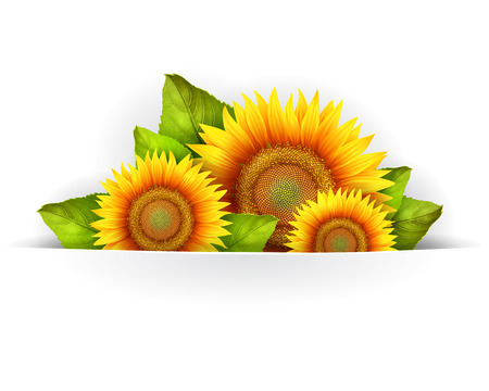 pollinate: Banner floral background or card template with blooming sunflowers, vector background