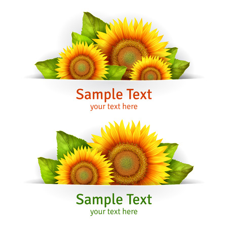 sunflower seeds: Banner floral background or card template with blooming sunflowers, vector background