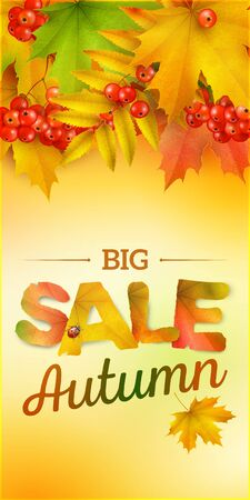 mountain ash: Autumn sale, vertical banner, vector background with maple leaves and berries of mountain ash Illustration