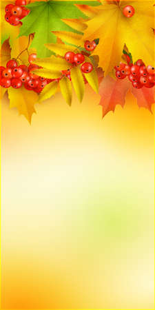 ash: Autumn vertical banner, vector background with maple leaves and berries of mountain ash Illustration