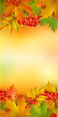 mountain ash: Autumn vertical banner, vector background with maple leaves and berries of mountain ash Illustration