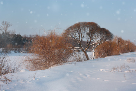 riverside landscape: Winter landscape with forest and trees on the riverside