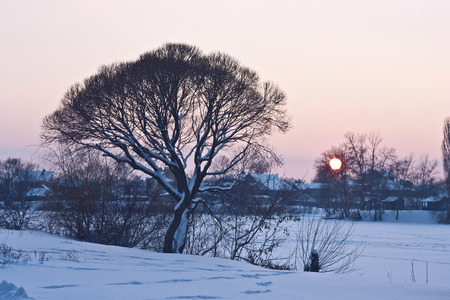 riverside trees: Evening winter landscape with village and trees on the riverside