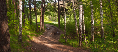 Spring landscape, banner, Panorama - road near the pine forest, next to a pond Stock Photo