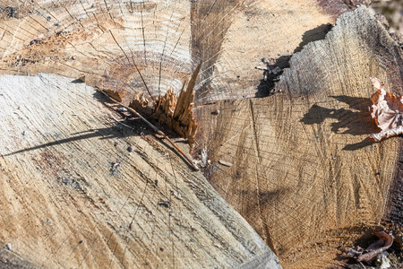 grey pattern: Ð¡lose-up of the weathering of the old driftwood stump, a cut of a tree with annual rings Stock Photo