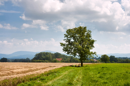 Rural landscape cyclist rest under a tree in Moravian-Silesian region in the Czechs republic against the background of mountains Western Carpathians