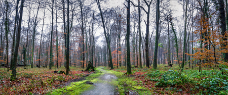 Natural landscape - park with trees and paths next to the Augustusburg and Falkenlust Palaces, city of Bruhl, North Rhine-Westphalia, The Germany Imagens