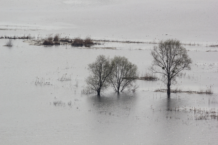 Spring landscape - flood in river valley of the Siverskyi (Seversky) Donets, the  flooded meadows and trees, the northeast of Ukraine