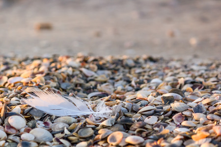 Seagull feather on the seashore which is covered shells on the sand after the storm, close-up Stock Photo