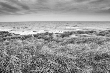 Beautiful seaside landscape - coast of South Holland with grass covered sand dunes, the Netherlands, in black-and-white color