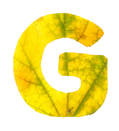 Letter G carved from the autumn leaves, isolated on white background, closeup