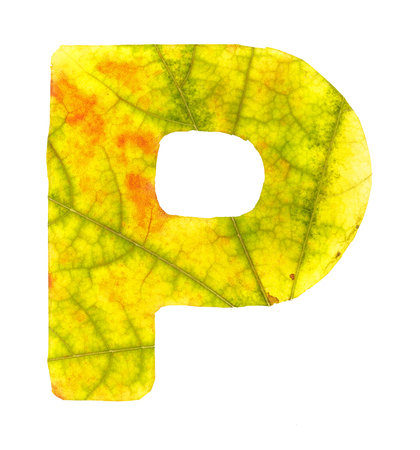 Letter P carved from the autumn leaves, isolated on white background, closeup Banco de Imagens