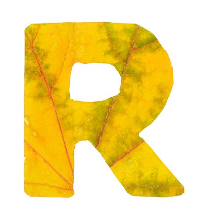 Letter R carved from the autumn leaves, isolated on white background, closeup