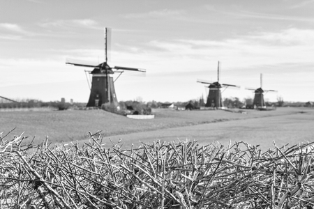 Rural landscape, in black-and-white color - view of green meadow on background of the mills on a sunny day, the Netherlands Stockfoto