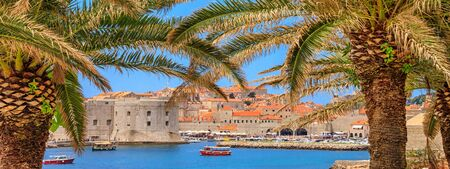 Coastal summer landscape - view of the palm trees on the background of the City Harbour of the Old Town of Dubrovnik on the Adriatic coast of Croatia