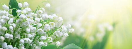 Lily of the valley (Convallaria majalis), blooming spring flowers, closeup with space for text