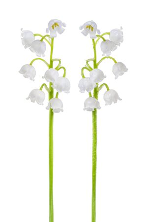 Set of Lily of the valley (Convallaria majalis) stems, blooming spring flowers, closeup, isolated on white background