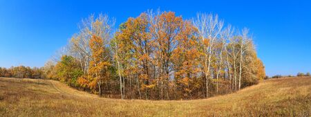 Autumn landscape - view of the dirt road along a grove of young oaks and aspens on a sunny day, the northeast of Ukraine
