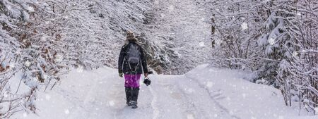 Winter landscape, banner - view of the snowy road with a walking hiker in the winter mountain forest after snowfall