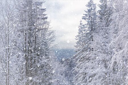 Winter landscape - view of the snowy trees in the winter mountain forest after snowfall