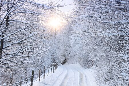 Winter landscape - view of the snowy road in the winter mountain forest after snowfall Stock fotó