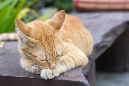 Cute cat, cat lying on the wooden floor in the background blurred close up playful cats, cats relaxing vacation. Stock Photo
