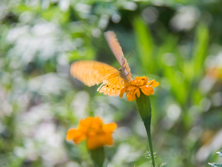 Soft focus Butterfly on the flower, feeling move. Butterfly on the green leaf. Abstract beautiful light from sunshine.