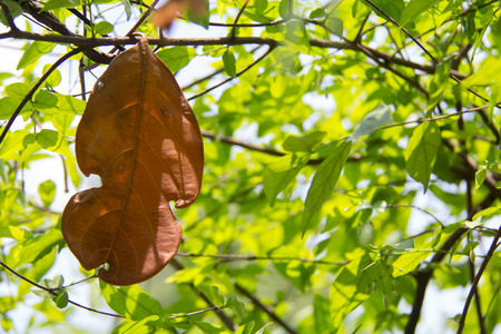 Abstract spring leaf with bokeh background. dry leaf with bokeh background. Stock Photo