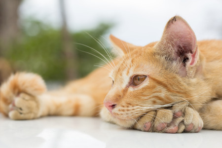 Cute cat, cat lying on the wooden floor in the background blurred close up playful cats