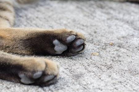 Paws cat close-up
