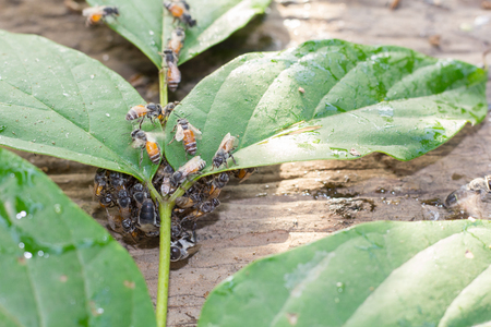 bees swarming on the leaf Stock Photo