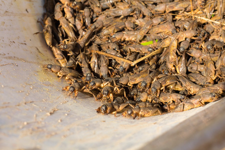 Abstract soft blurred and soft focus of Fried crickets Stock Photo