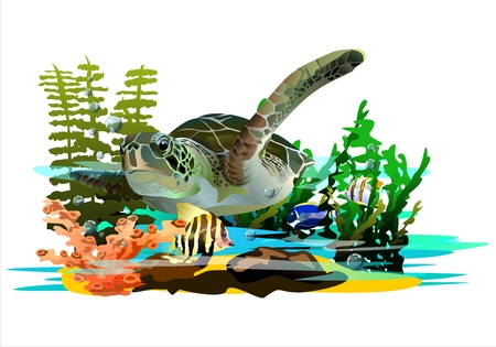 Sea turtle in coral reefs.