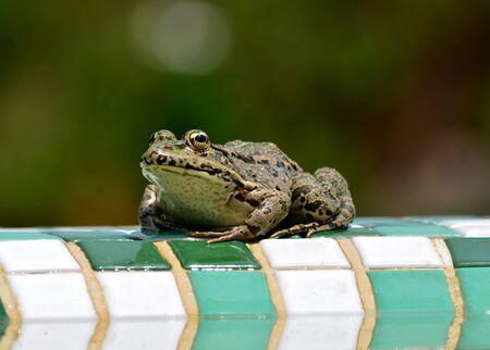 カエルをバウンスします。