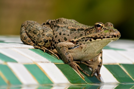 anticipating: The Anticipating Frog
