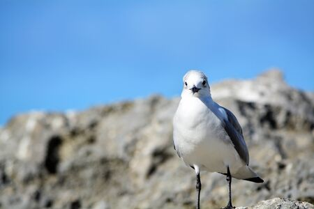 starring: Bird starring on Rocks Stock Photo
