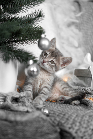 Cute gray kitten playing with Christmas toys on a Christmas tree sitting on a gray plaid