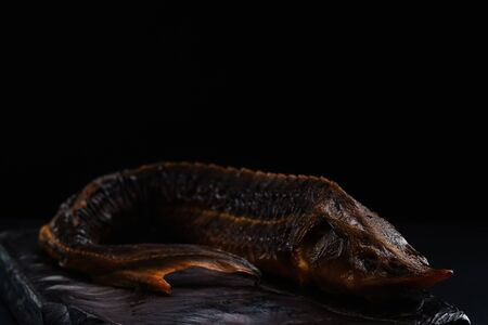 Very large Russian sturgeon on a black background.