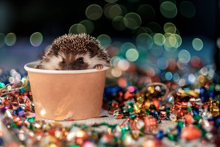 A small decorative hedgehog is looking at the camera. Christmas card with a cute little hedgehog. Holidays, winter and celebration concept. copyspace - holidays, animals and celebration concept
