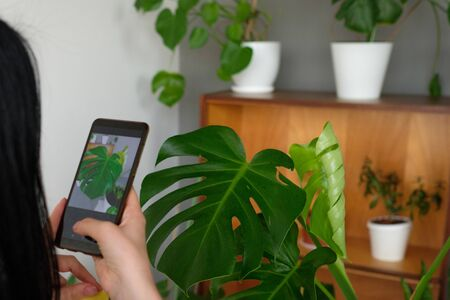 young girl photographs home plants on the phone. eco blogger. ecology. hobby. concern for the environment. spring-cleaning. allergy