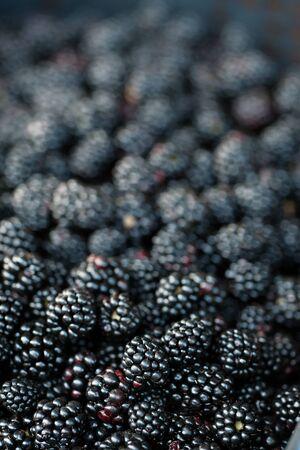 Fondo de moras frescas, de cerca. Gran cantidad de bayas crudas de frutas silvestres jugosas maduras sobre la mesa. Vista superior, endecha plana Foto de archivo